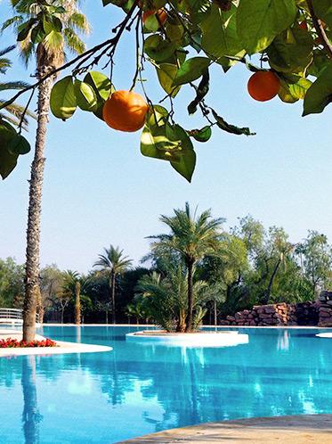 La piscine sous les oranger du jardin