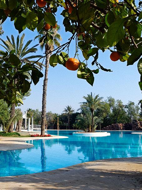 piscine-orange-palmier-marrakech