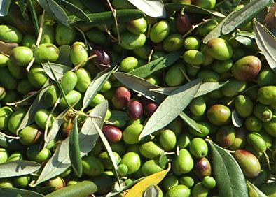 oliviers parc saadi marrakech